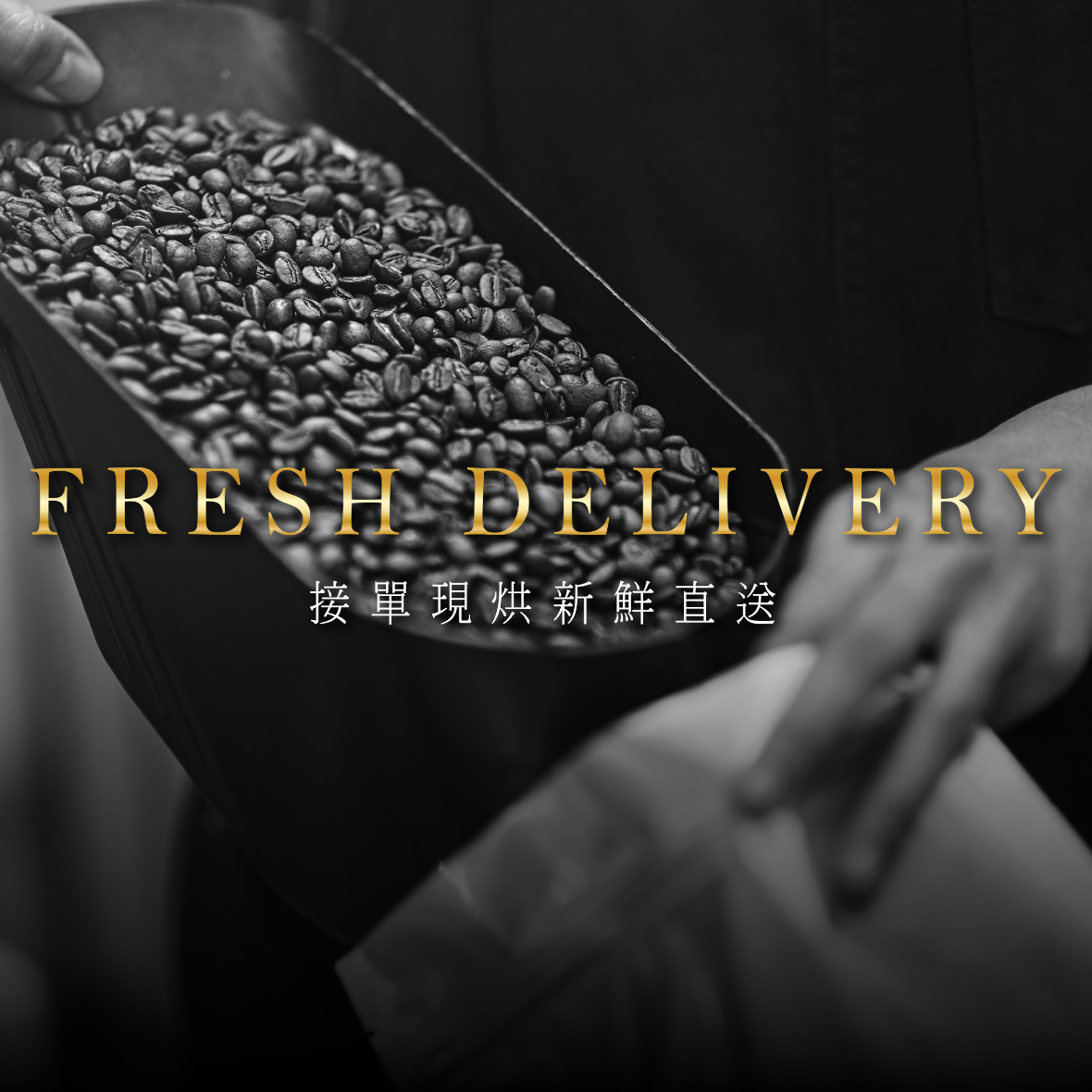 黑鑲金咖啡-多明尼加墨翠咖啡豆